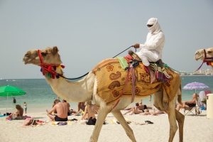 Are camels on the beach NOT normal?