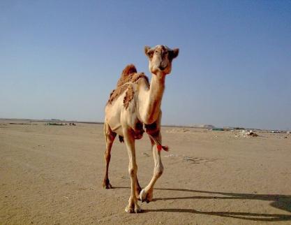 Kuwait-01b